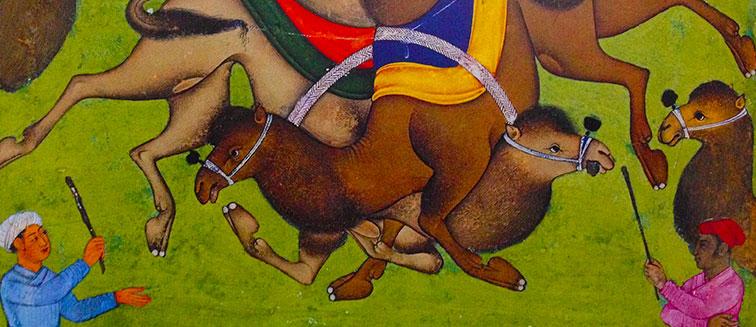Festival de la Lucha de Camellos en Selcuk