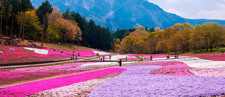 how to travel from tokyo to hokkaido