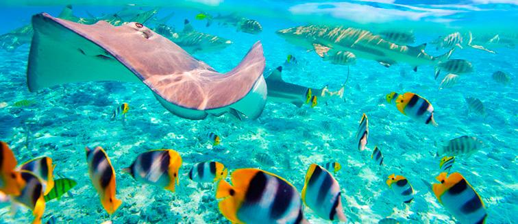 Isla Maafushi
