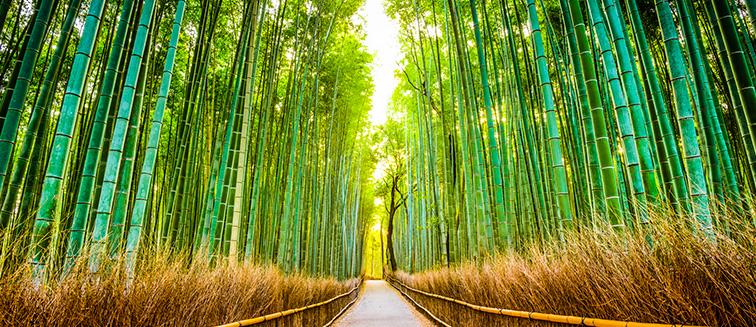 cuándo viajar a Kioto