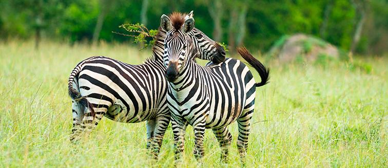 mejor época para viajar a Uganda