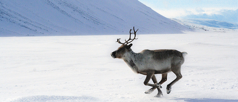 Laponia - Kuusamo