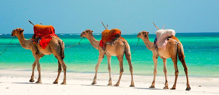 cuándo viajar a Mombasa