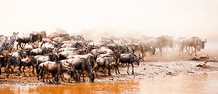 Parque Nacional de Serengueti