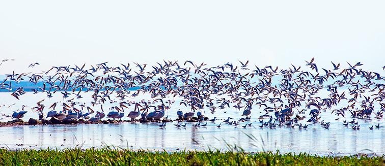 Parque Nacional del Lago Manyara