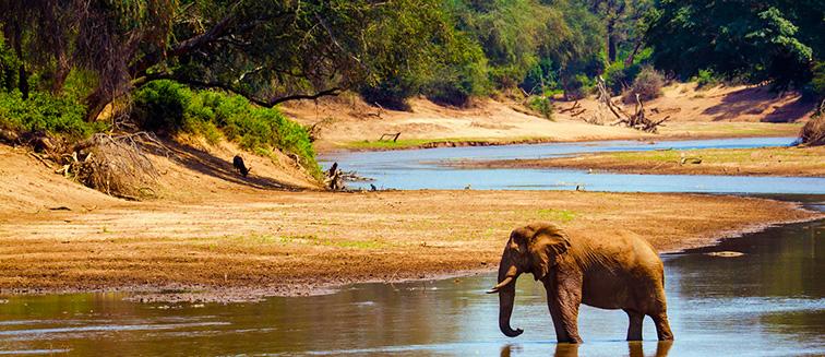 cuándo viajar a Sudáfrica para hacer un Safari