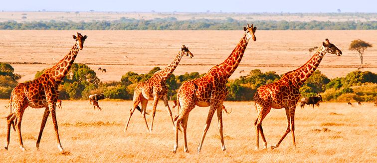 Reserva de Samburu